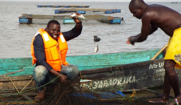 Chiela fish cage Harvesting- Isaac and George